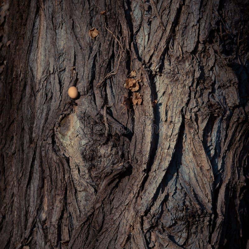 布朗在木头的鸡蛋 概念 免版税库存照片
