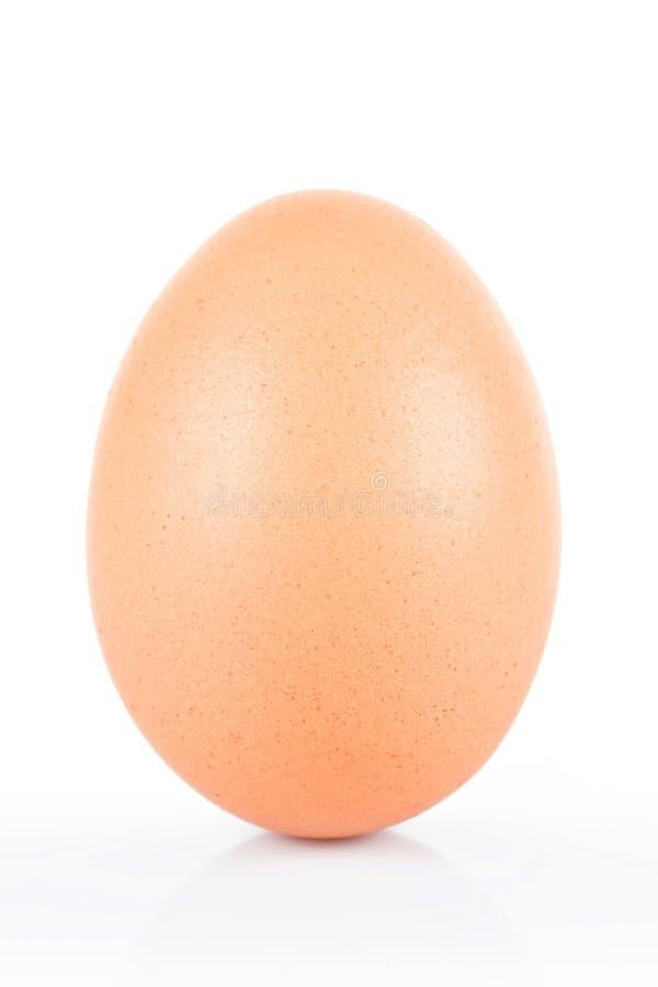 布朗在白色隔绝的鸡鸡蛋 免版税图库摄影