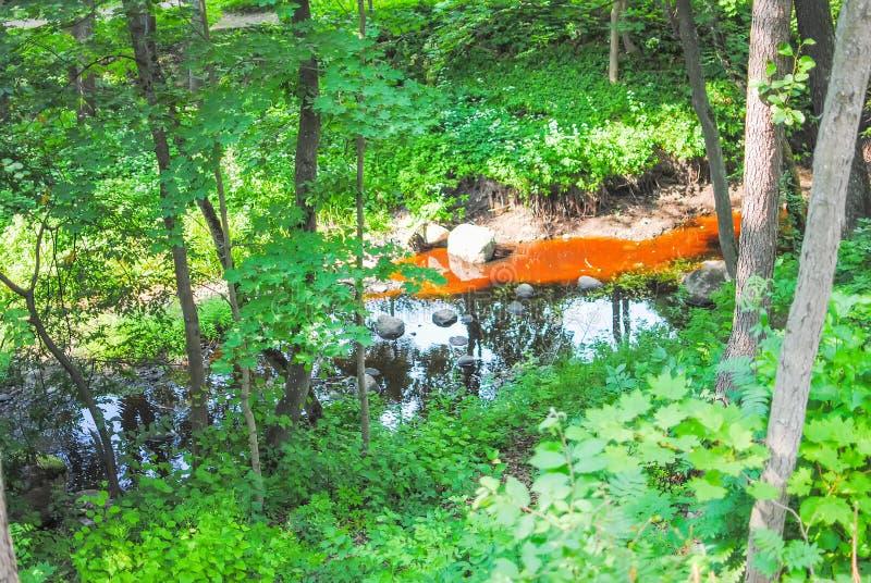 布朗小河在公园 免版税库存照片