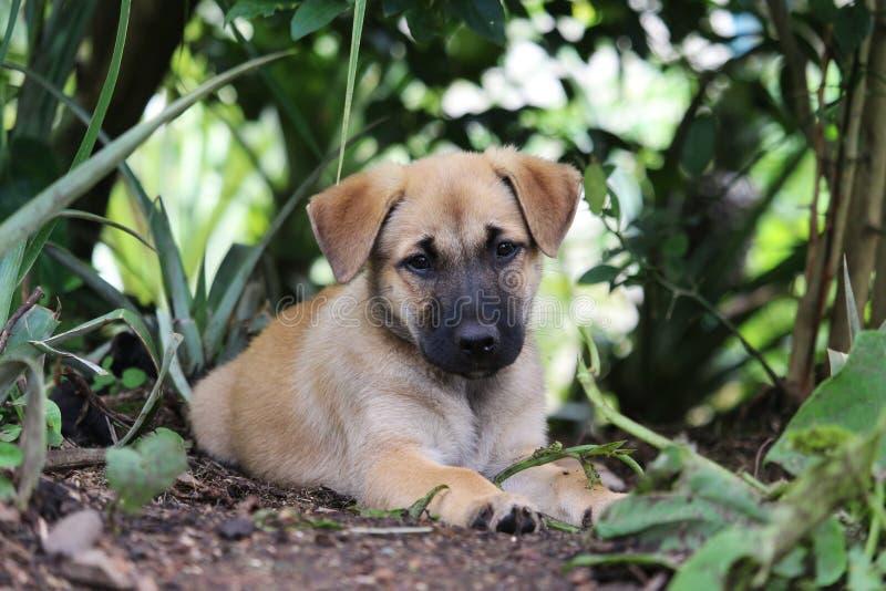 布朗小狗在庭院里 图库摄影