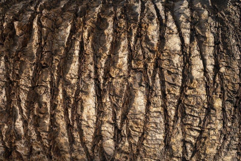 布朗棕榈树树干纹理背景 自然有机材料 库存照片