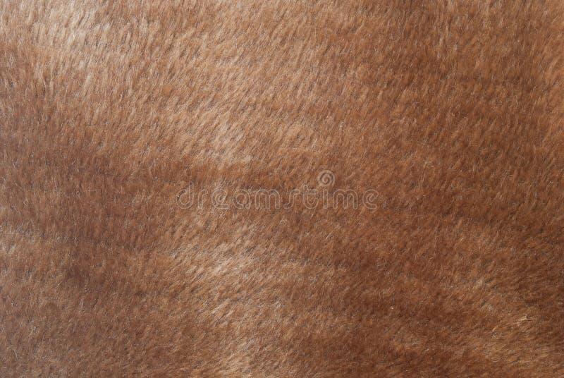 布朗毛皮 免版税库存照片