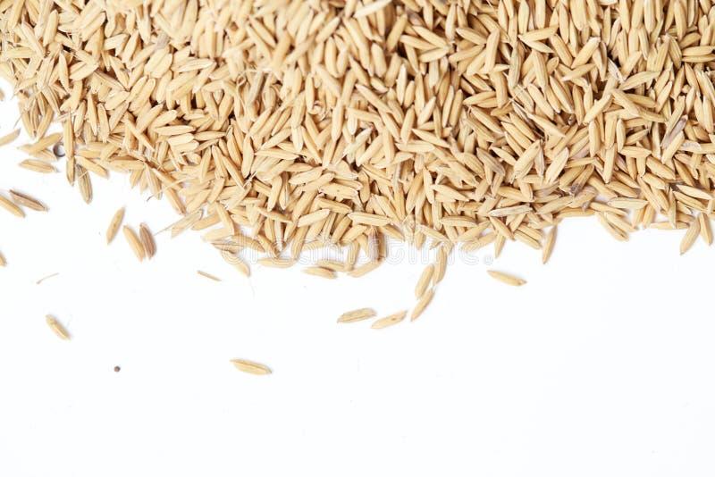布朗水稻闭合的背景 免版税库存图片
