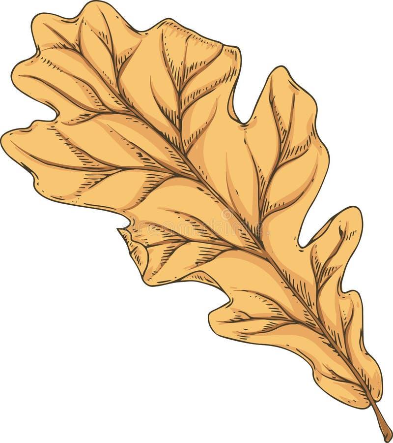 布朗烘干了橡木叶子 皇族释放例证