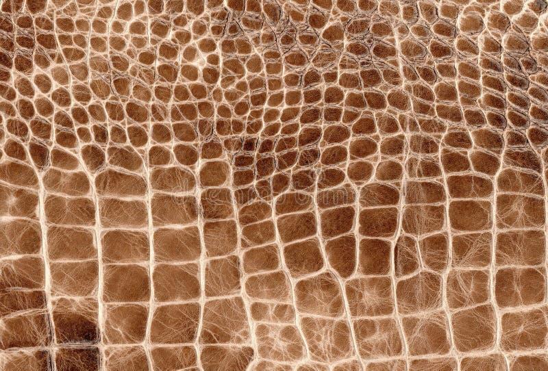 布朗爬行动物自然皮革纹理 蛇、鳄鱼或者龙皮肤样式 免版税库存图片