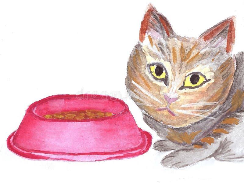 布朗猫乞求为食物 免版税库存图片