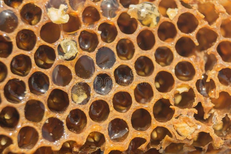 布朗甜蜂窝用蜂蜜,特写镜头 库存照片