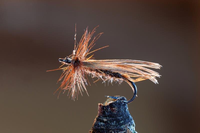 布朗用假蝇钓鱼诱剂 库存图片