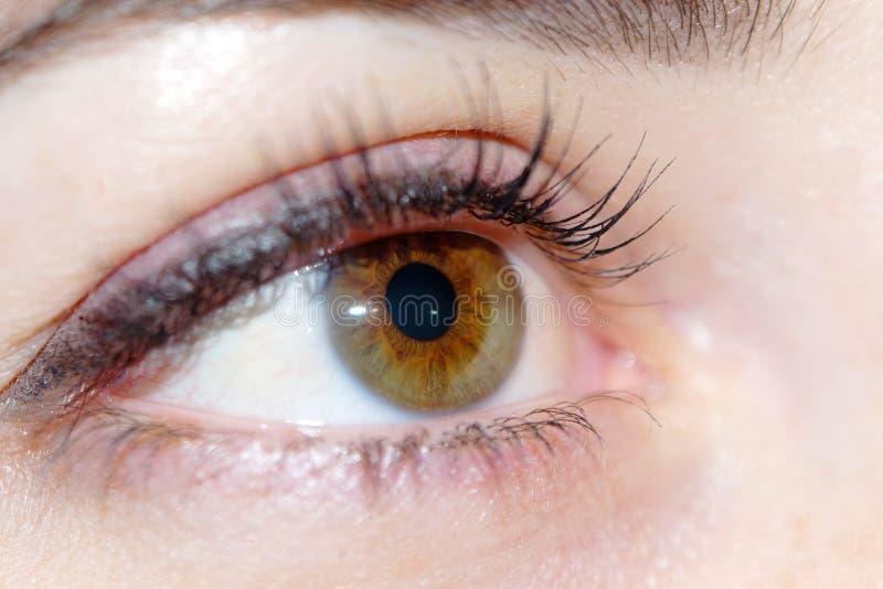 布朗眼睛妇女特写镜头 免版税库存图片
