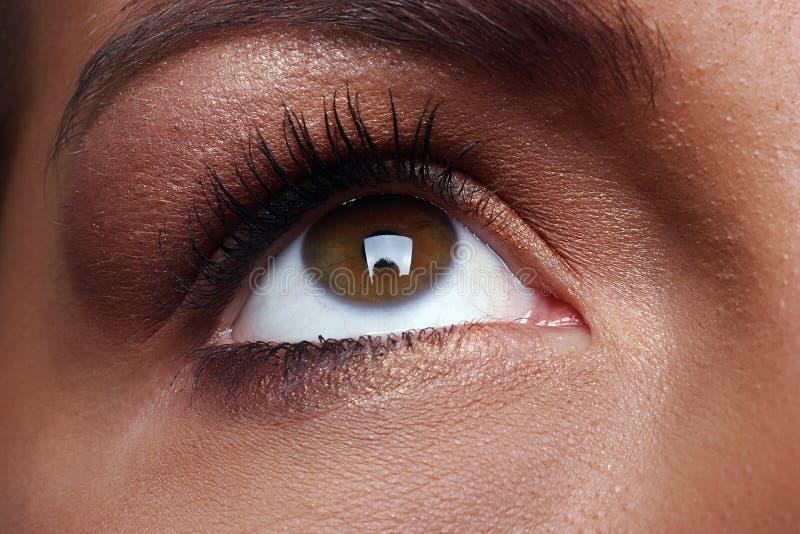 布朗眼睛 免版税库存图片