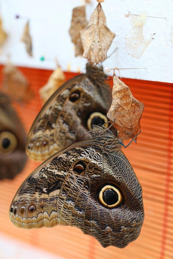 布朗蝴蝶在庭院里 免版税库存图片