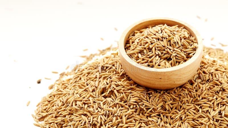 布朗被关闭的水稻  免版税库存照片