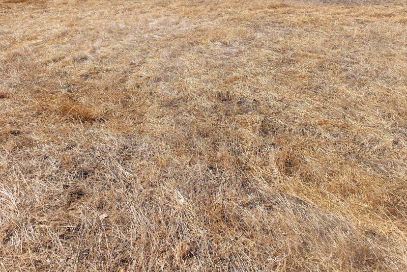 布朗死的草天旱季节中 免版税库存图片