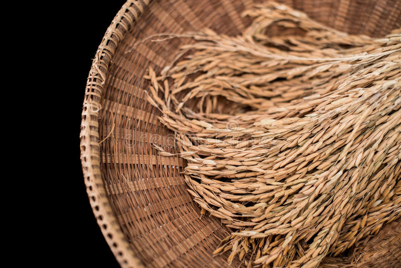 布朗水稻闭合的背景 库存照片