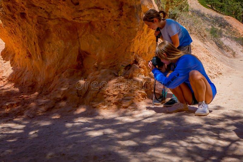 布赖斯峡谷,犹他, 2018年6月, 07日:为一只美丽的金黄被覆盖的地松鼠照相的未认出的妇女  图库摄影