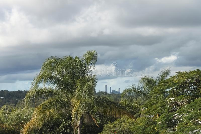 布里斯班澳大利亚地平线看法通过从东南部的热带树在风雨如磐的天空下 免版税库存照片