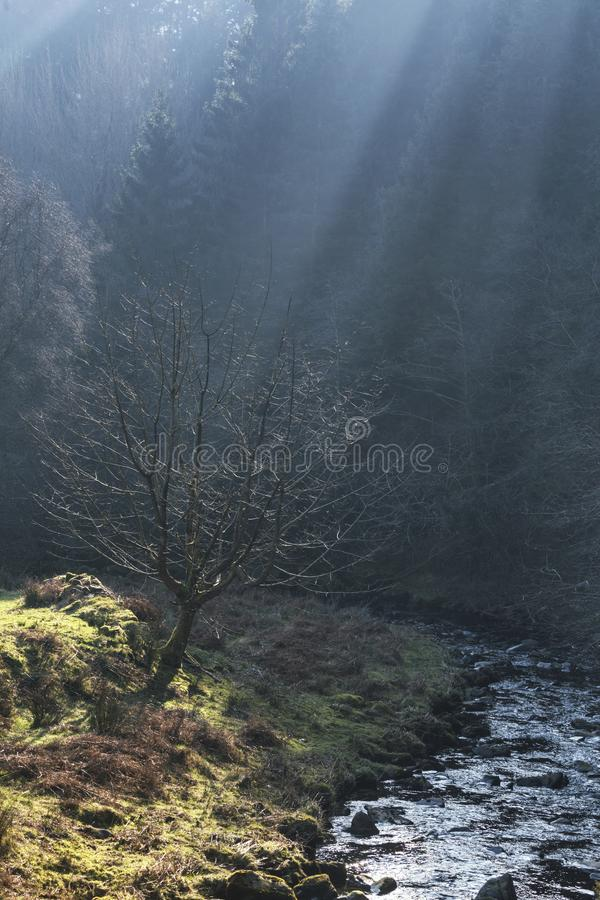 布雷肯比肯斯山风景早晨薄雾的 免版税库存图片