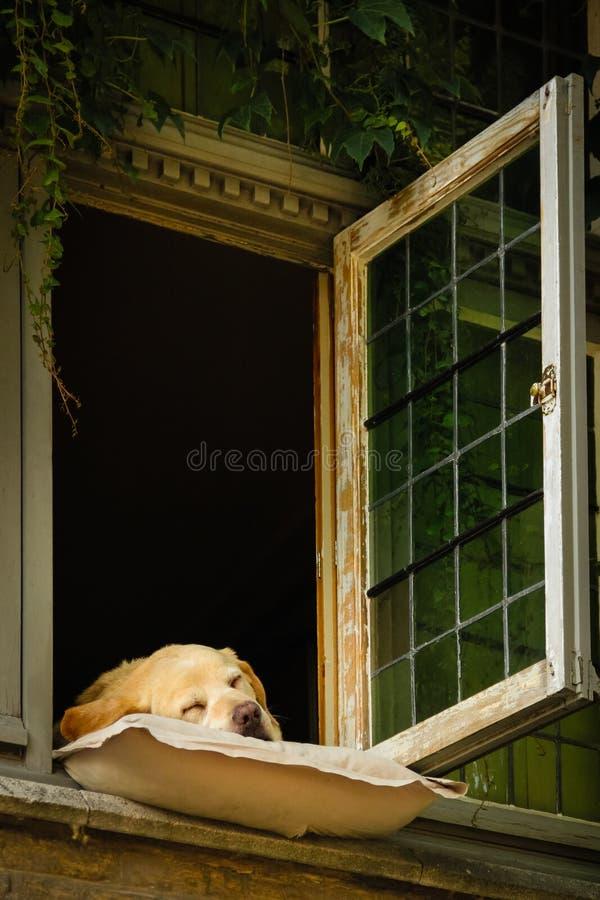 布鲁日睡觉狗  比利时 免版税库存照片