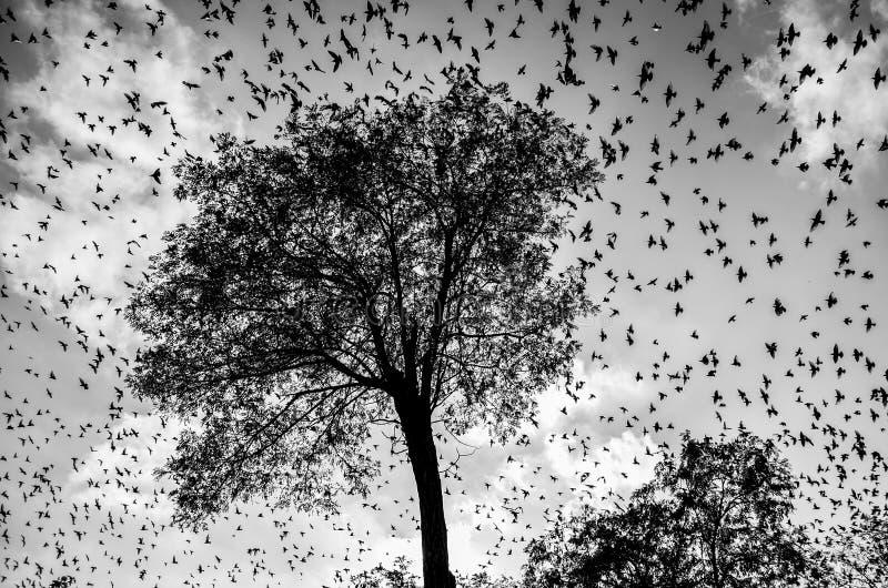 希区柯克的鸟 免版税库存照片