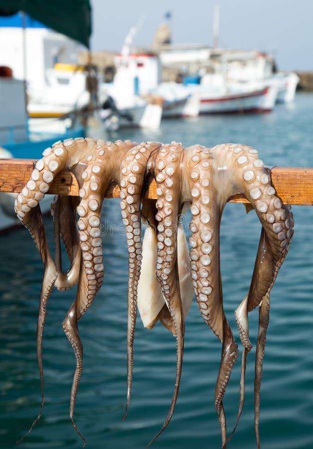 希腊一只鲜章鱼在棍子上干燥 图库摄影