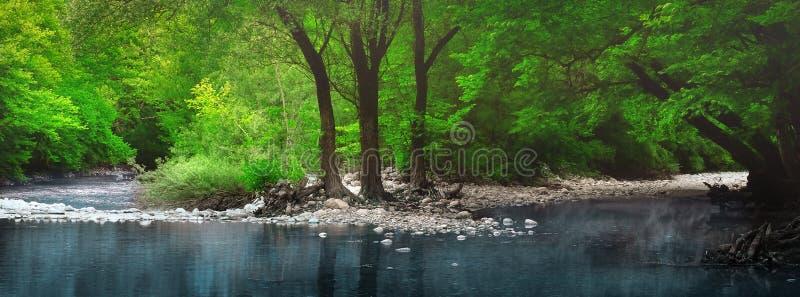 希腊奥林匹斯山美丽池塘中树干的映照 免版税库存照片