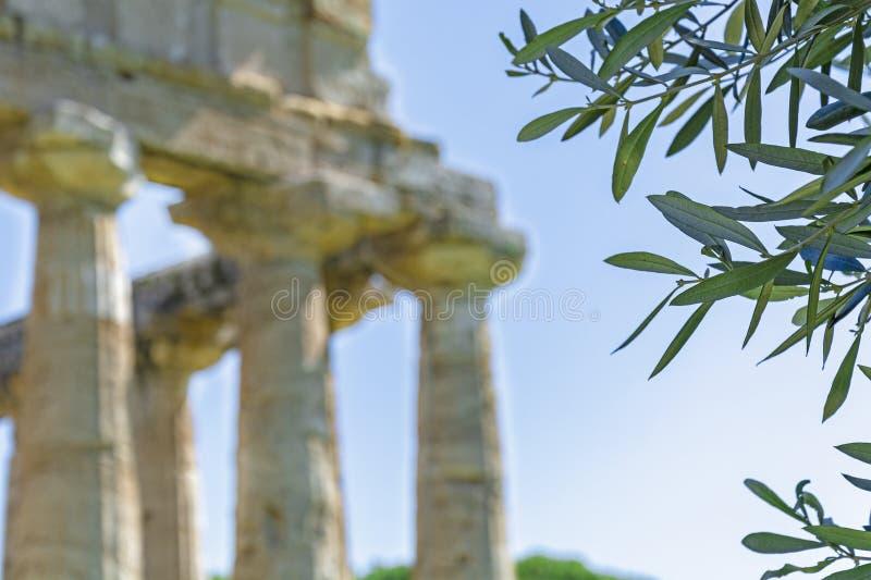 希腊寺庙和橄榄树叶子 库存照片