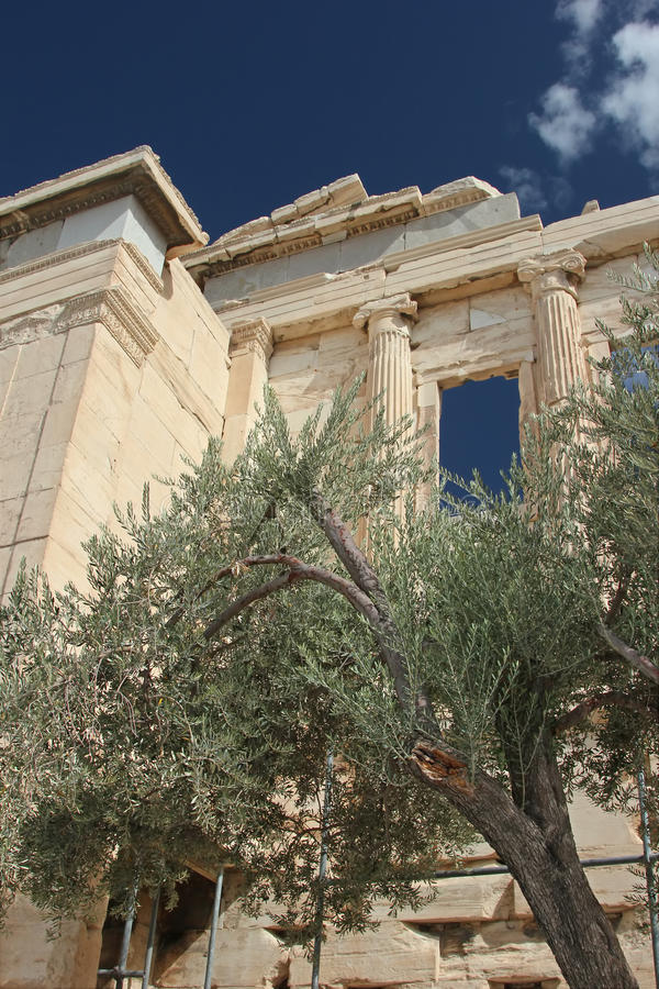 希腊寺庙和橄榄树 库存照片