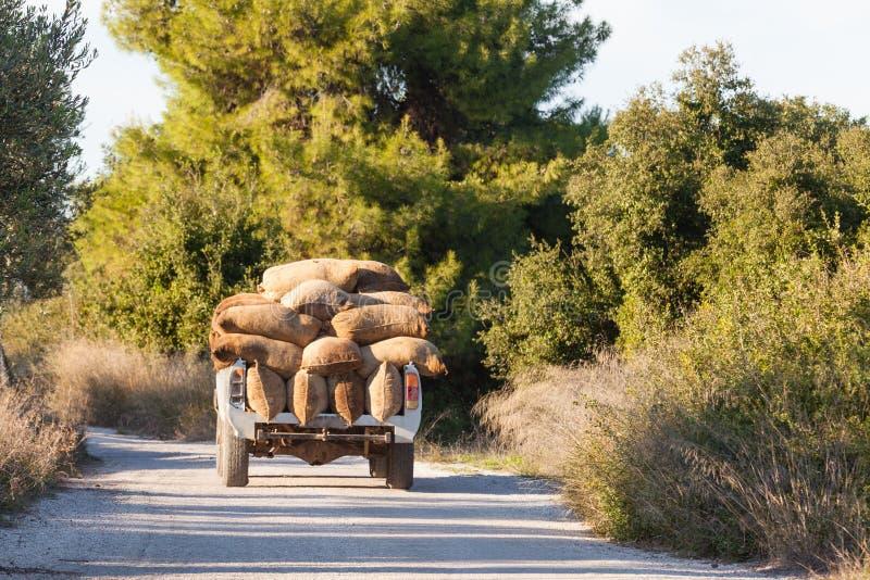 希腊橄榄色的齐墩果europaea收获被装载的卡车 库存图片