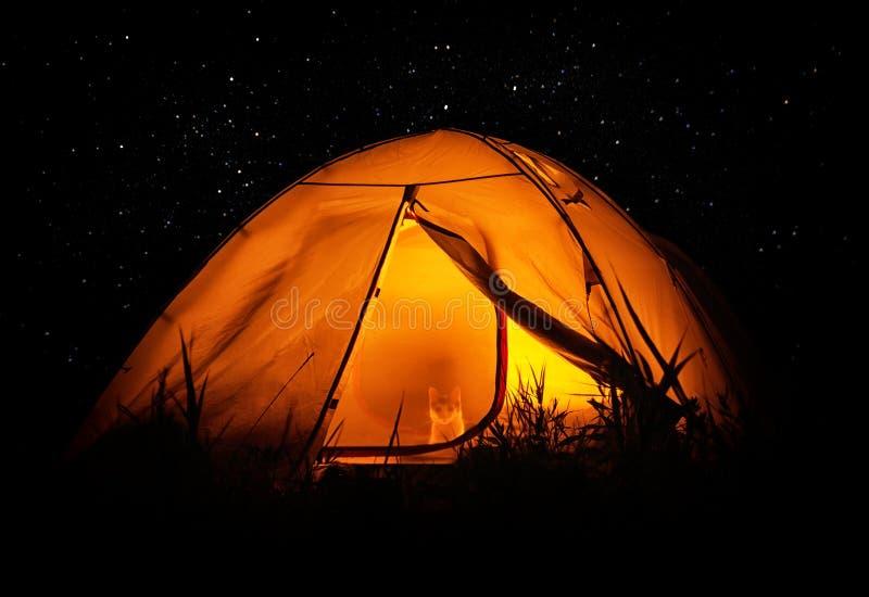 帐篷的猫旅客 免版税库存图片