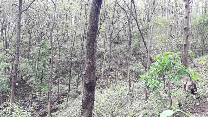 帕尔内拉valsad的古杰雷特印度'valsad beauti小山森林' 免版税图库摄影