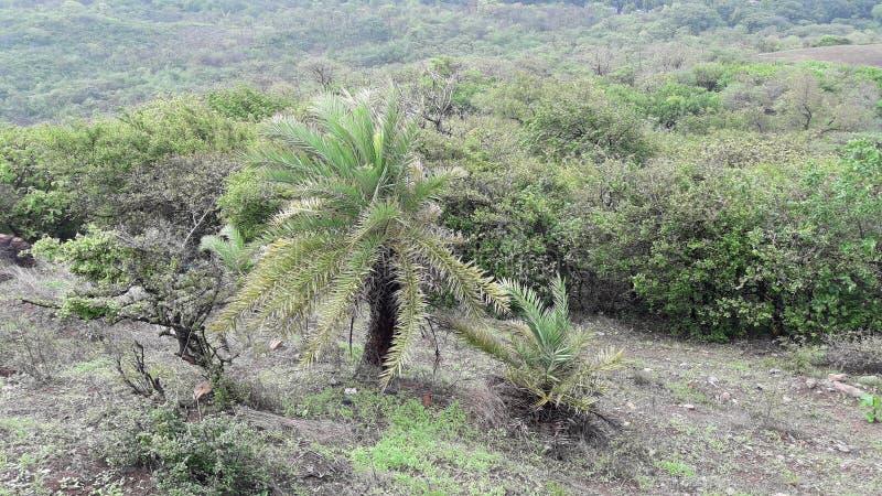 帕尔内拉valsad的古杰雷特印度'valsad beauti小山森林' 库存照片