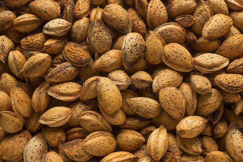 带壳的杏仁 概念-健康吃,素食主义 免版税库存图片