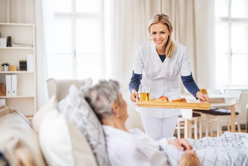 带来早餐的健康访客给在家在床上的一名病的资深妇女 免版税库存照片