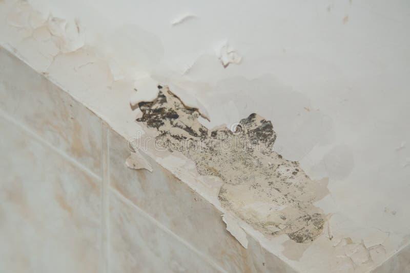 带水的受损天花板 库存照片