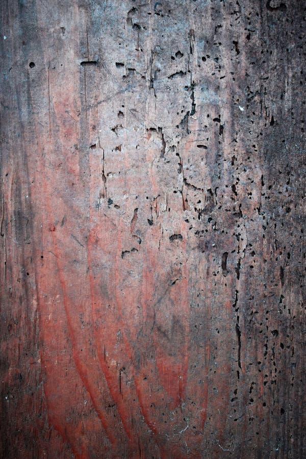 带红色木板条-与蠕虫孔的纹理 库存照片
