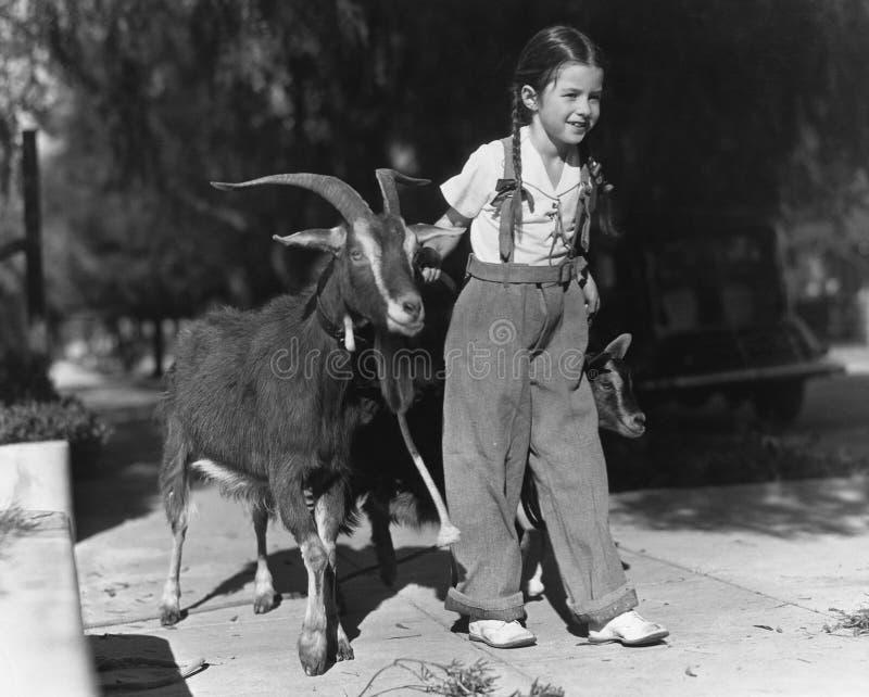带领两只山羊的女孩(所有人被描述不更长生存,并且庄园不存在 供应商保单将有n 免版税库存照片