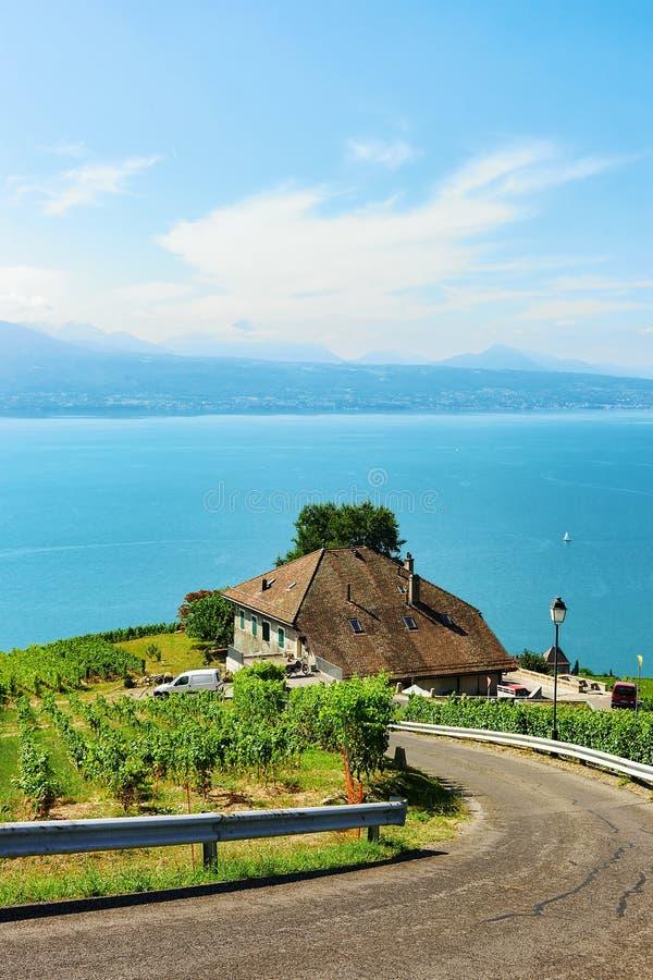 带领拉沃葡萄园梯田葡萄园大阳台供徒步旅行的小道的路在瑞士 库存图片