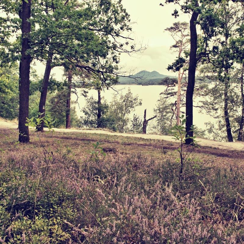 带领由有开花的石南花的湖在前景和在背景的Bezdez城堡的桑迪道路在捷克republ的暑假 图库摄影