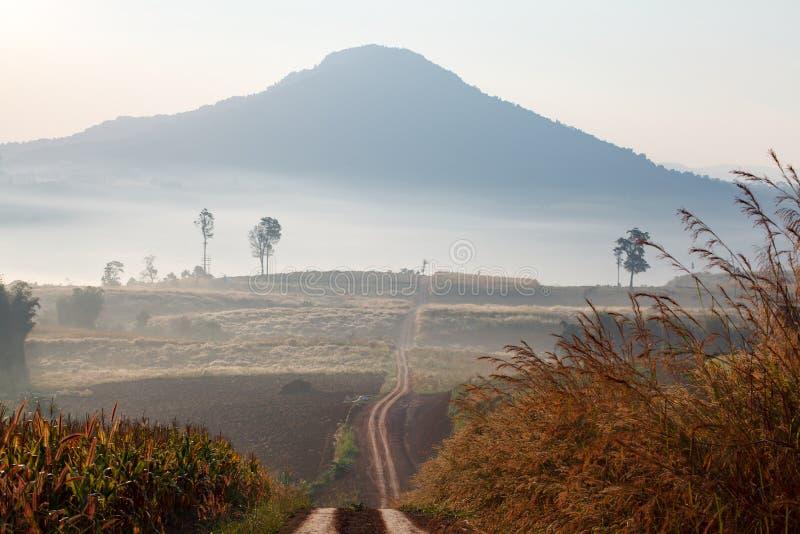 带领通过有雾的平均观测距离的早期的春天森林的土路 库存照片