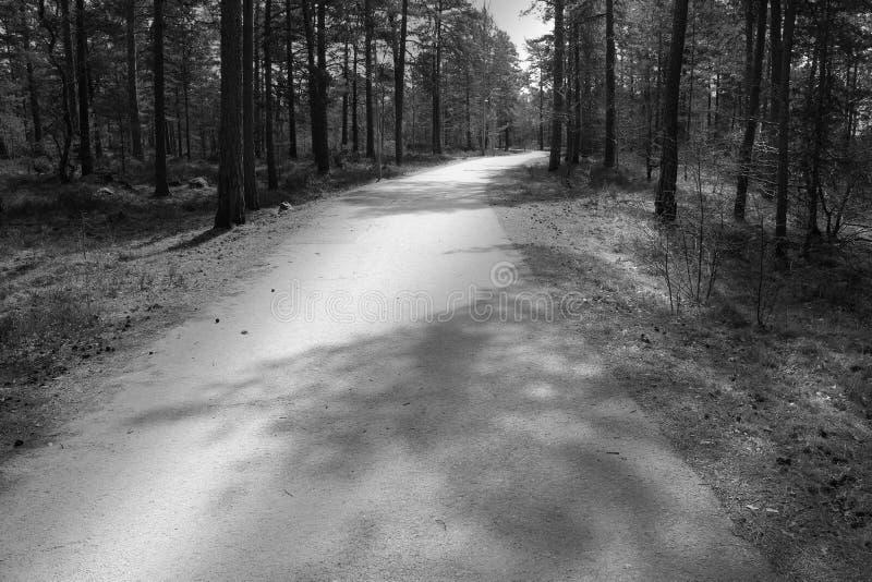带领通过森林的自行车道路 库存照片