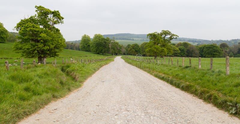带领通过绿色草甸的国家车道在爱尔兰 库存照片