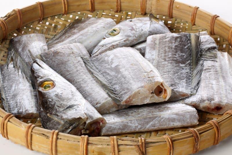 带鱼 免版税库存照片