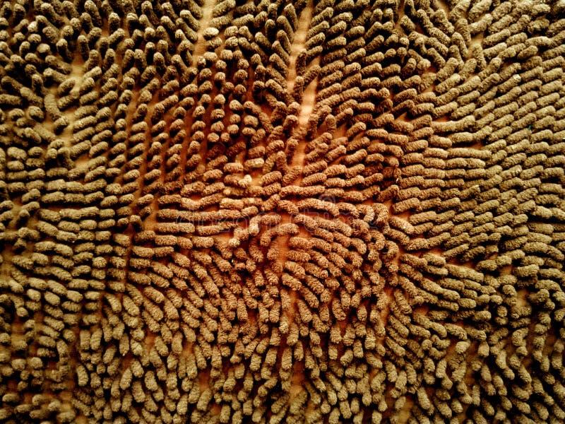 席子纹理背景 browne bac的天然纤维门垫 皇族释放例证