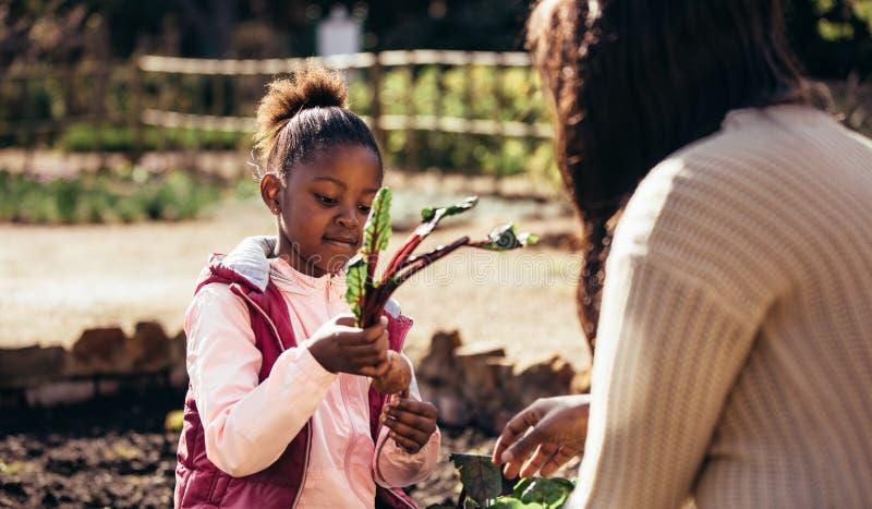 帮助她的母亲的小女孩在庭院里 免版税库存图片