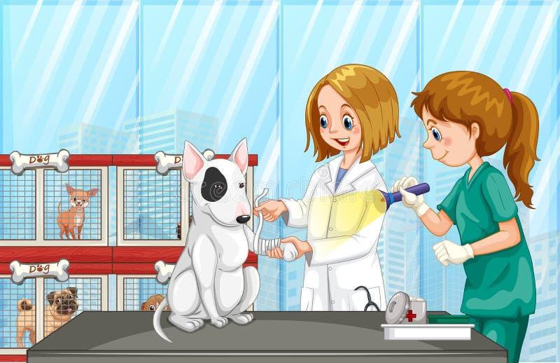 帮助狗的狩医在诊所 皇族释放例证