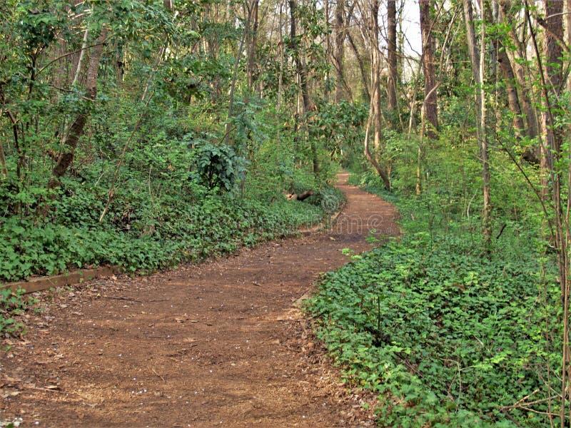 常春藤被排行的供徒步旅行的小道在Reynolda历史的区 库存照片