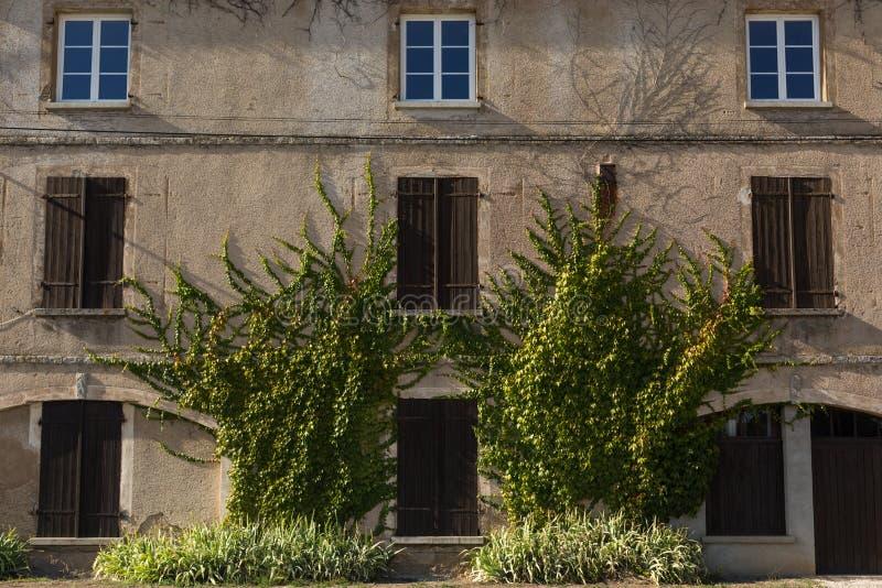 常春藤覆盖的大厦,第茂,法国 图库摄影