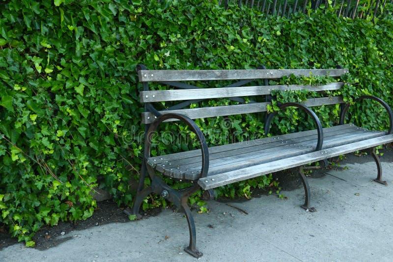 常春藤锐化在路面站立的公园长椅外面 免版税库存图片