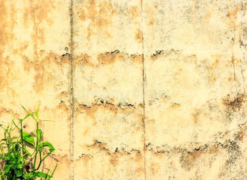 Download 常春藤 库存图片. 图片 包括有 爬行物, bossies, 庭院, 装饰品, 空间, 居住, 布琼布拉 - 72368839