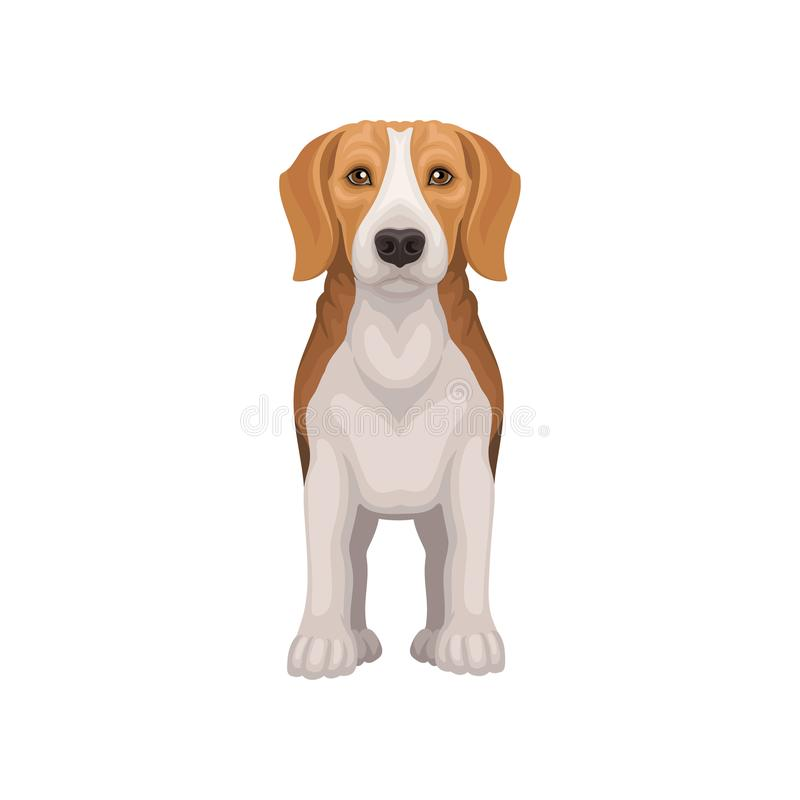 常设小猎犬平的传染媒介象,正面图 与发光的眼睛的可爱的小狗 与短的外套的小猎犬和 库存例证